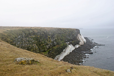 Seabird Nesting Cliffs - St. Paul Island