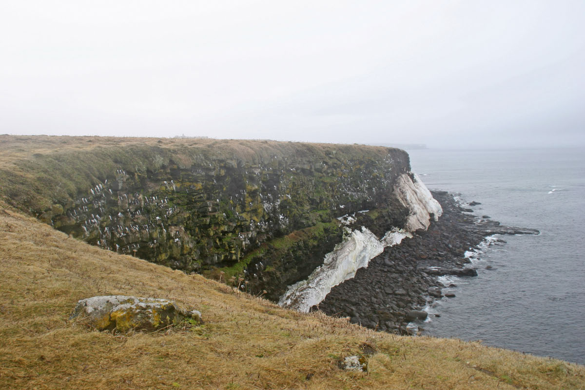 Seabird Nesting Cliffs - St. Paul Island