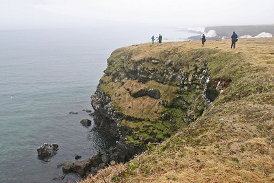 Seabird Nesting Cliffs