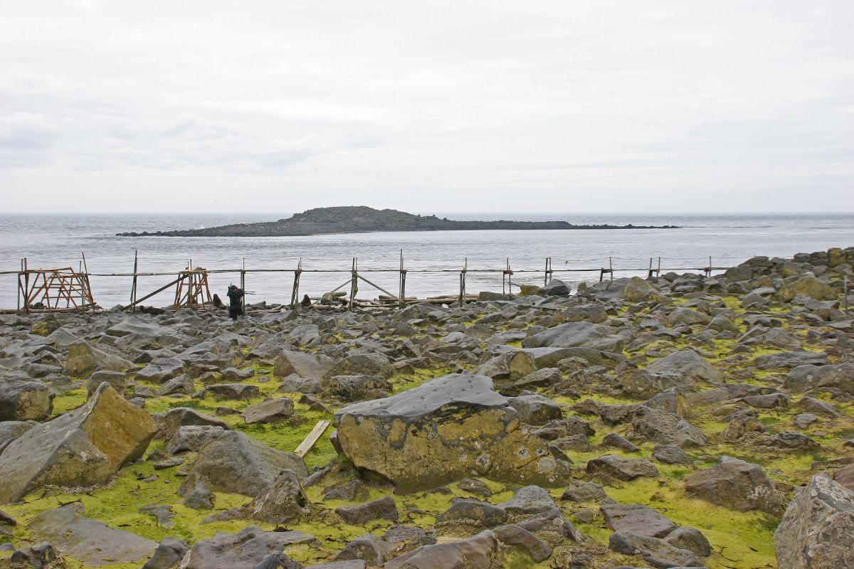 Northern Fur Seal Breeding Grounds