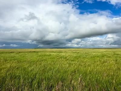Yellow Rail Prairie