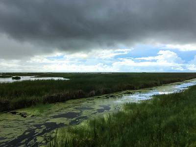 Oyster Bayou Moist Soil Unit