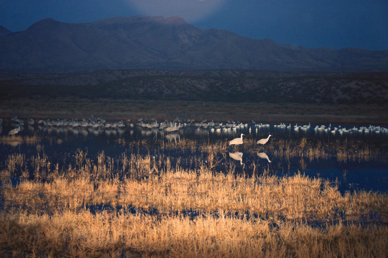 Sunrise at Hwy 1 Roosting Pond