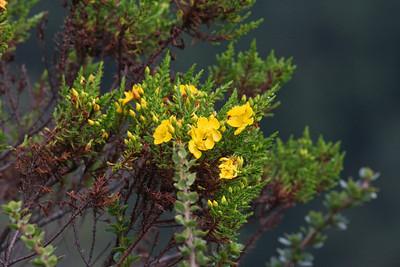 Wildflowers - Yanacocha Reserve