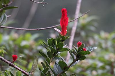 Wildflower - Yanacocha Reserve