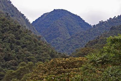 Mountain View - Bellavista Road