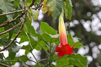 Flower - Sacha Quinda