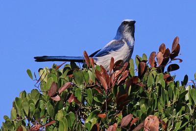 Florida Birding Trip - Jan 2010