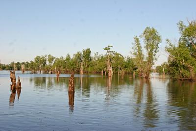 Atchafalaya Swamp - Henderson, LA