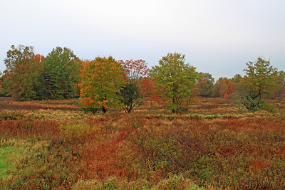Great Swamp NWR - Basking Ridge, NJ