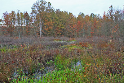 Great Swamp NWR