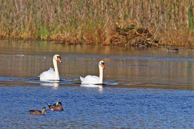 New Jersey & Delaware Birding Trip - 2011