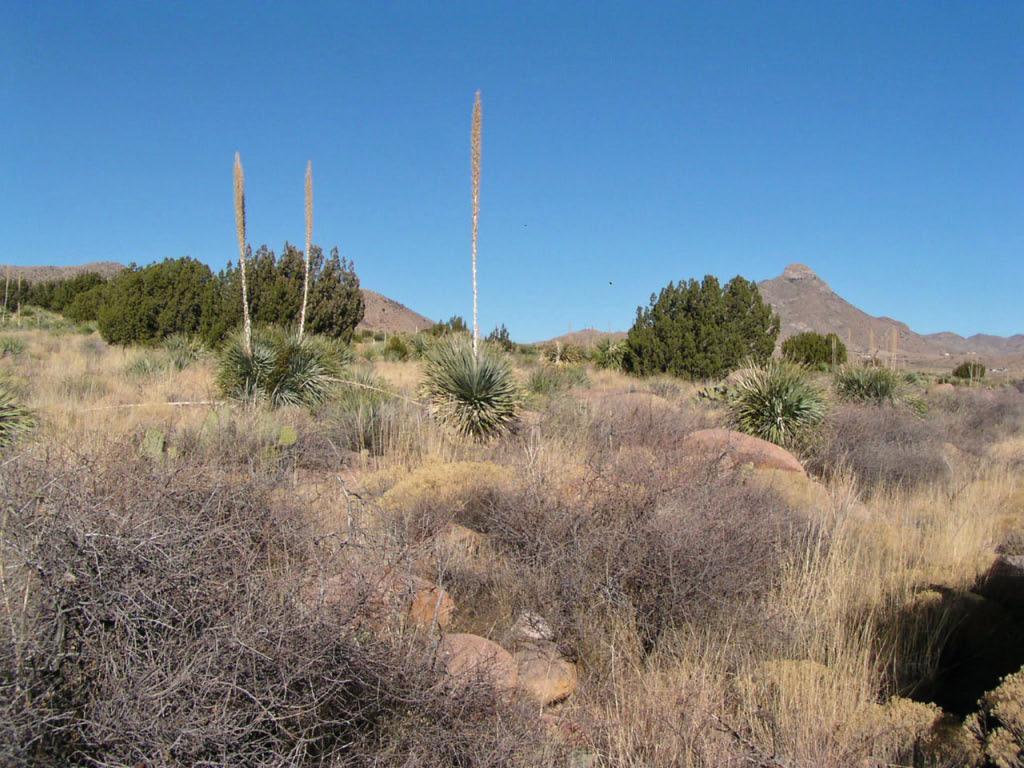 Las Cruces Area