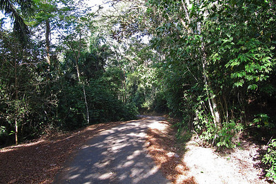 Mountain Road to Canopy Tower