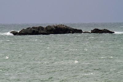 Double-crested Cormorant on Rocks