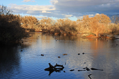 Duck Pond - Rio Grande Nature Center