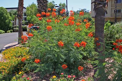 Flowers at Hampton Inn - Tucson