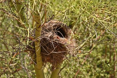 Bird Nest - Arizona-Sonora Desert Museum