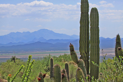 Arizona-Sonora Desert Museum - Tucson