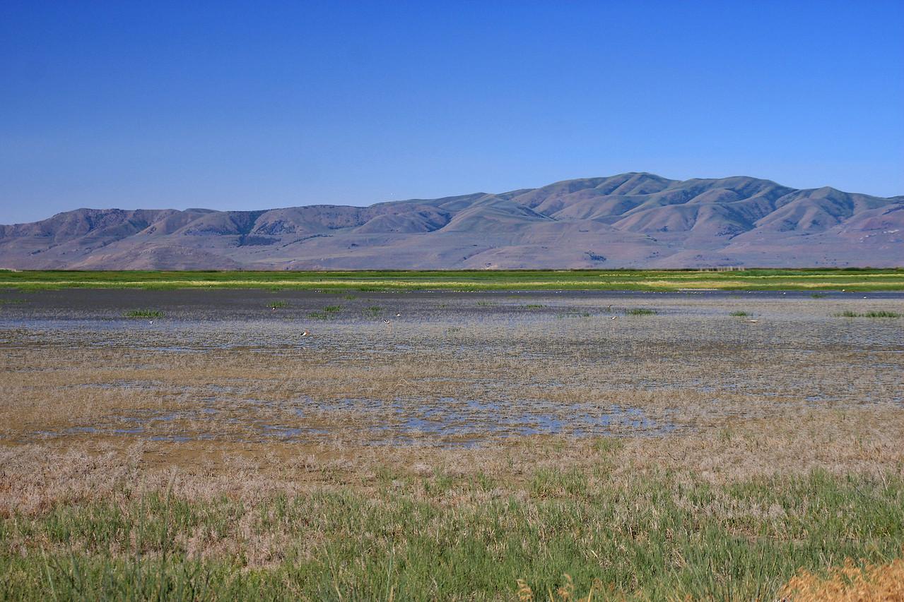 Bear River Migratory Bird Reserve