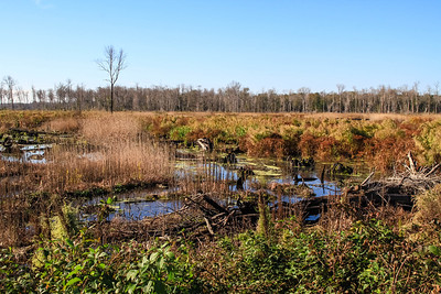 Great Dismal Swamp NWR