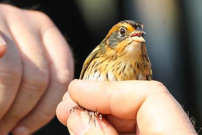 Virginia Birding Trip - Oct 2012