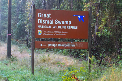 Great Dismal Swamp NWR, Suffolk, VA