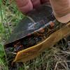 Turtle being manhandled.