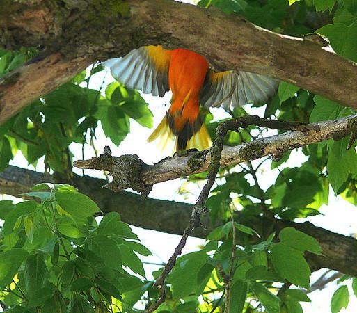 Birding at Crane Creek State Park