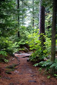 Beaver Pond Trail - Algonquin Park