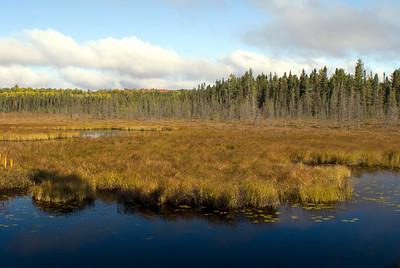 Spruce Bog Trail