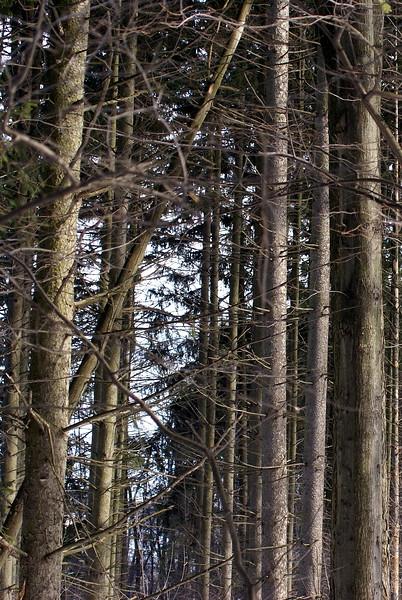 Woods surrounding Franklin Pond