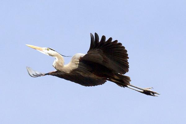 Birding in Ontario