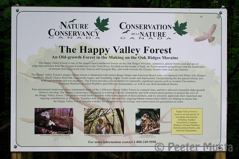 """The Happy Valley Forest is one of the largest intact hardwood forests on the Oak Ridges Moraine, a massive, glacier-borne sand and gravel ridge that stretches from the Niagara Escarpment to the Trent River. Perched on this height of land, the Forest protects groundwater and the headwaters of streams flowing toward Lake Simcoe and Georgian Bay, and south towards the Greater Toronto Area and Lake Ontario.<br /> <br /> The Happy Valley Forest's steeply rolling terrain is blanketed with mature Sugar maple and American Beech trees, interspersed with White Ash, Eastern Hemlock, Black Cherry, Red Oak, Largetooth Aspen, and Trembling Aspen. Kettle ponds and depressions, formed during the last glacial retreat, now hold cool swamps and wet meadows. The Forest provides critical habitat for nationally significant species such as Acadian Flycatchers, Cerulean Warblers, Hooded Warblers and Jefferson Salamanders, as well as rare Red-shouldered Hawks."""