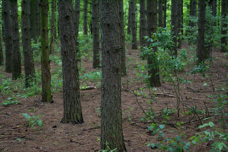 Forest Floor<br /> <br /> Taken at Laurel Creek C.A