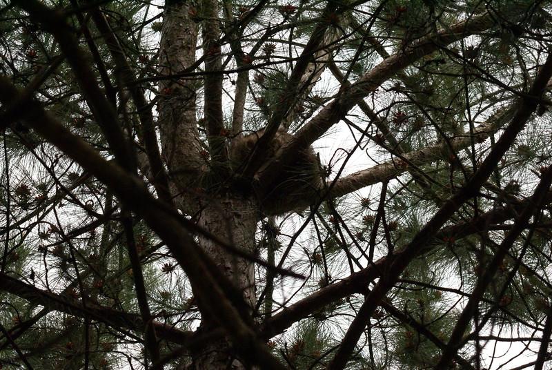 Porcupine?<br /> <br /> Taken at Laurel Creek C.A