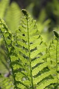 Ferns rising to meet the sun.