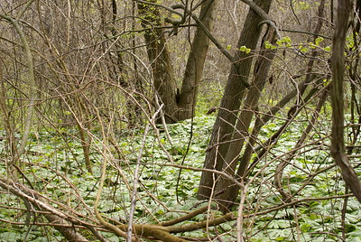 Shots of the Carolinian Forest Habitat.
