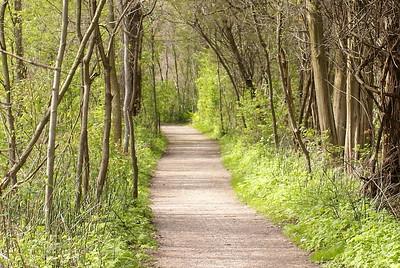 The Tilden Woods trail - Shots of the Carolinian Forest Habitat.