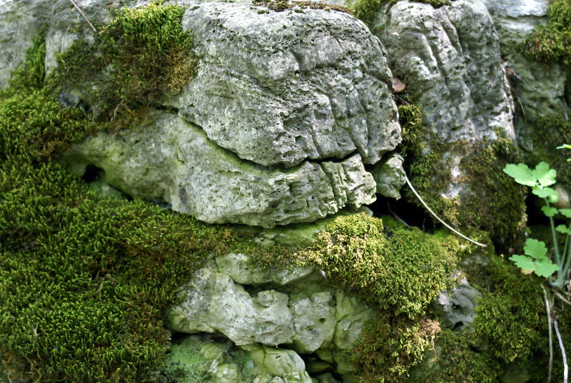 Rocks with Moss