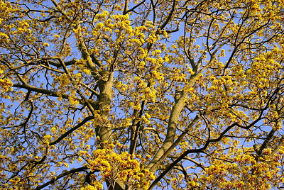 Beautiful Tree. Not sure what kind though...have enough trouble identifying the birds :D
