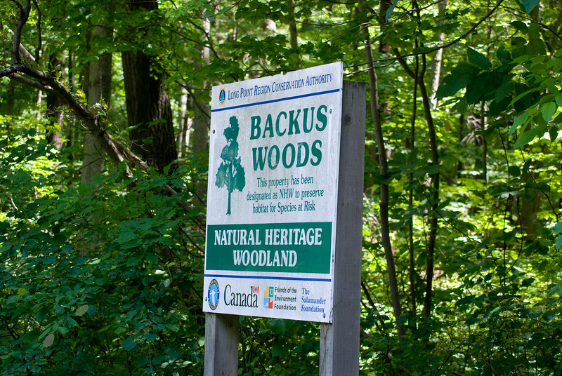 Sign at entrance to Northern portion of Backus Woods
