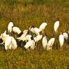 plenty of wood storks too