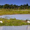 northern pantanal