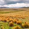 high-elevation paramo grasslands in the Antisana reserve