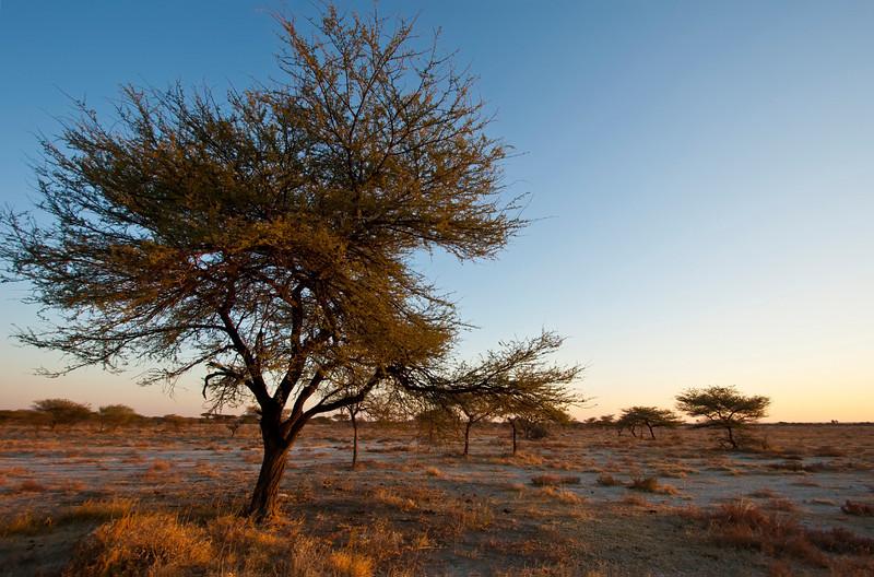 near sunset, onguma preserve