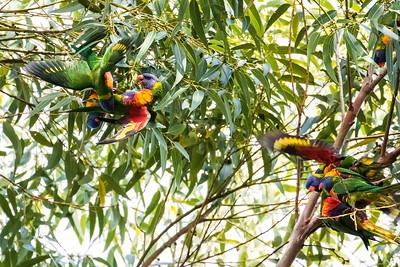 OZ 2017 birding highlights