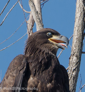 In this picture the young eagle's eyes are closed.