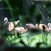 Flamingo Group at the Ashboro Zoo