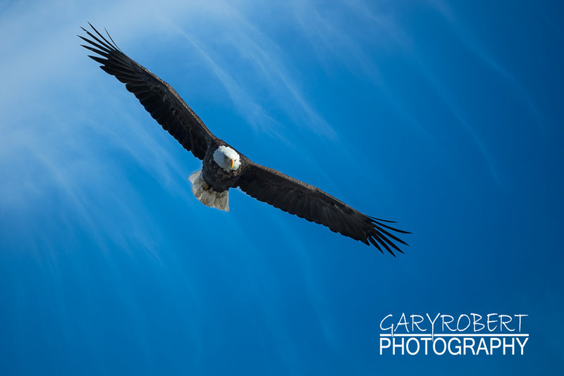 Eagles-6458